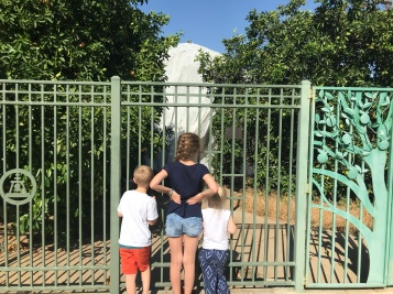 3 of my favorite kids checking out all the enclosed trees