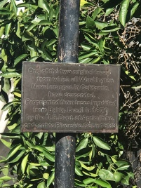 Plaque behind the surviving parent Navel tree in Riverside California
